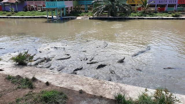 Taman Buaya Teluk Sengat