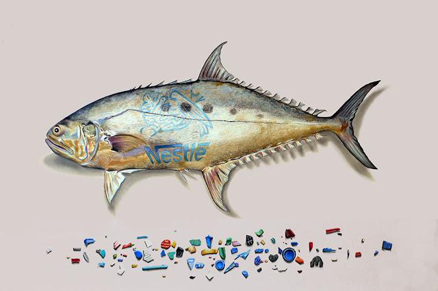 QUEENFISH-Gaint-Scomberoide sous lequel on peut voir des fragments de plastique multicolores