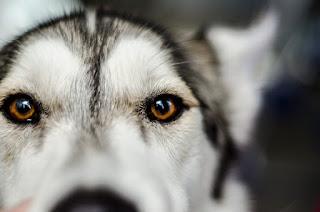 7 Dog Breeds With Sensitive Souls