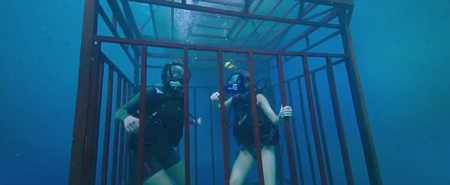 47 Metres Down: Film Review