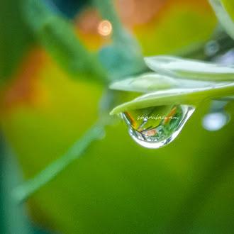 Selepas Hujan, Air Pun Menjadi Embun