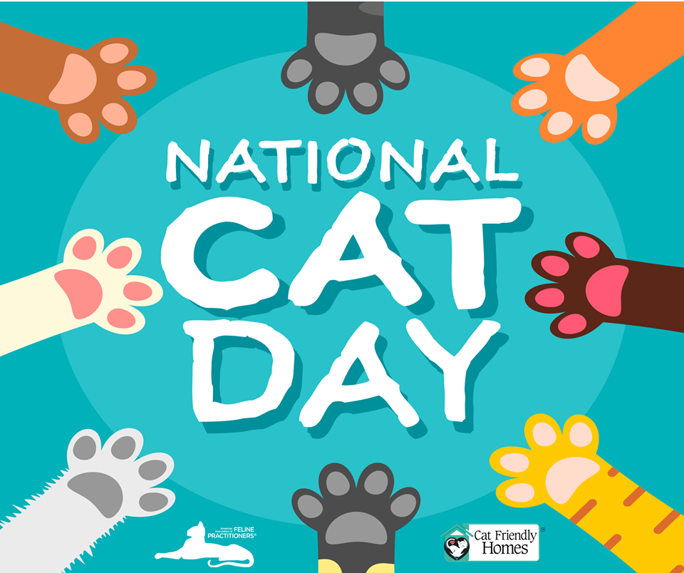 National Cat Day Wishes For Facebook