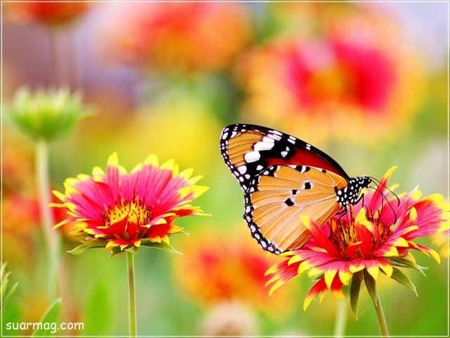 اروع صور زهور وخلفيات ورود جميلة جدا بأشكال متنوعة للعشاق
