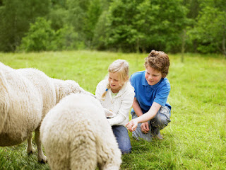 Open Farm with Animals at Bogstad, Norway