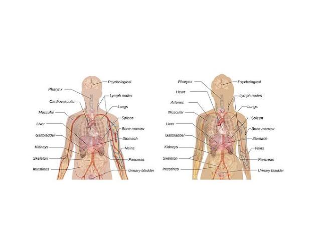 10 Pertanyaan Seputar Ginjal Beserta Jawabanya     Makanan apa saja yang dapat menyehatkan ginjal?  1. Kembang Kol    Sayuran dari jenis kubis-kubisan ini ternyata mengandung banyak vitamin C dan juga merupakan sumber serat dan asam folat yang tinggi. Selain itu, kembang kol juga kaya akan indoles, tiosianat, glukosinolat, senyawa-senyawa ini berperan penting dalam membantu organ hati melawan zat racun yang dapat membahayakan DNA dan membran sel.  Anda bisa menyajikan kembang kol ini sebagai tambahan pada salad, sup, atau sayuran rebus dan menjadikannya menu makanan keseharian. Menumbuknya menjadi pasta juga bisa dijadikan pengganti kentang tumbuk pada menu diet Anda. Selain itu, tingkat lemak yang tinggi pada tubuh juga akan memengaruhi fungsi ginjal. Jadi, mengonsumsi kembang kol ini sebaiknya dalam kondisi segar atau hanya direbus saja.    2. Bawang Bombai    Bumbu masakan yang sangat umum digunakan di masyarakat ini ternyata bisa dijadikan makanan untuk meningkatkan fungsi ginjal. Aromanya yang khas merupakan penanda kandungan sulfur di dalamnya. Selain itu bawang bombai juga merupakan sumber kromium yang diketahui sangat baik dalam membantu metabolisme lemak, protein, dan karbohidrat.  Bawang satu ini pun kaya akan kandungan flavonoid, terutama quecetin yang merupakan antioksidan kuat yang terbukti dapat mengurangi risiko penyakit jantung dan dapat melindungi tubuh dari efek negatif kanker.  Untuk mendapatkan manfaat bawang bombai ini pada ginjal, Anda dapat menambahkannya seperti biasa pada makanan sebagai bumbu penambah aroma serta sebagai isian salad atau burger.    3. Paprika Merah    Bahan makanan berwarna merah terang ini ternyata juga sangat baik untuk ginjal. Rasanya yang lezat dan rendah potasium membuatnya efektif untuk diet ginjal Anda. Namun tidak hanya itu, paprika merah juga merupakan sumber vitamin A, C, B6, serat dan asam folat. Kandungan antioksidan jenis lycopene nya yang tinggi juga dapat melindungi ginjal Anda dari kanker.    Oleh karena kha
