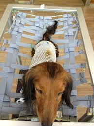 cães suspensos