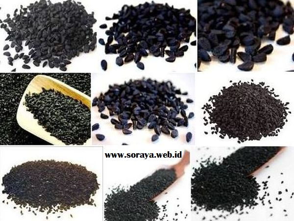 jintan hitam habbatussauda