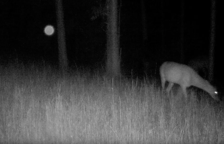 Flying Orb Caught On Forest Cam Observing Deer Video Aug
