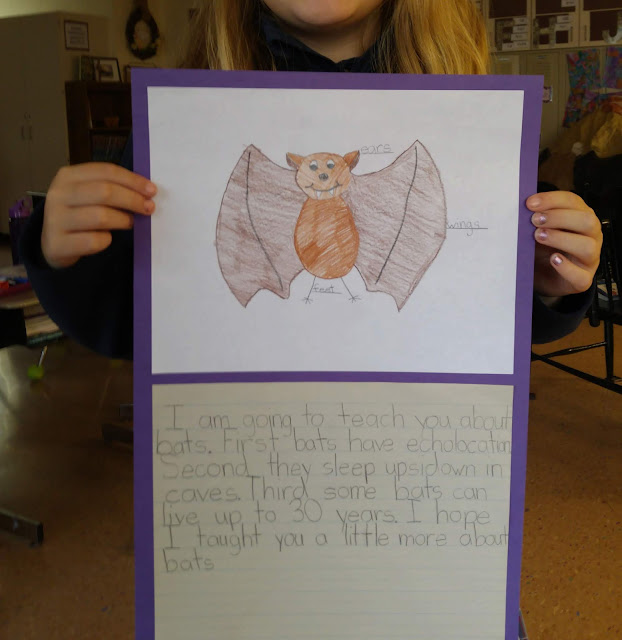 Scientific Bat Writing