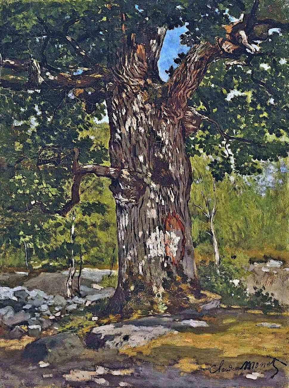 a Claude Monet painting 1865, of a sun dappled tree in the forest