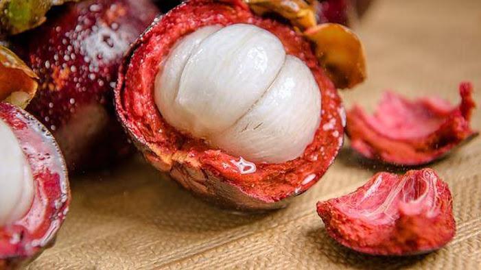 Bibit buah manggis super unggul Denpasar
