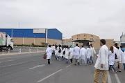 شركة كبيرة في انتاج الحليب بالمغرب باغي تخدم 50 واحد في بزاف المدن