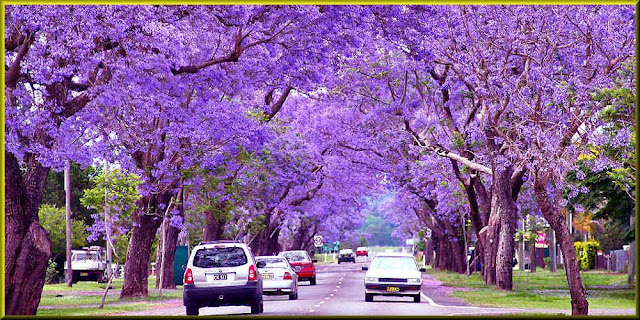 Grace-full Nail Polish Jacaranda Tree inspiration