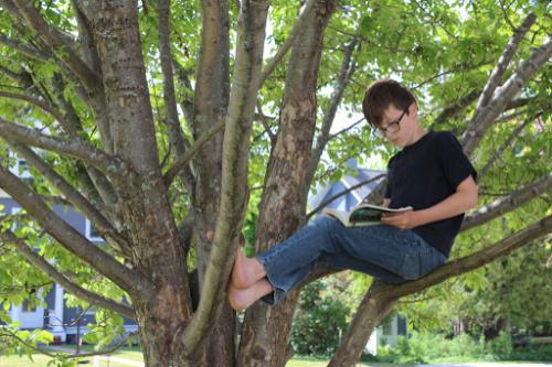 boy reading in a tree