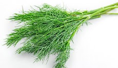 9 Amazing Benefits Of Dill Weeds