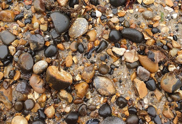 Shark's Tooth found at Herne Bay