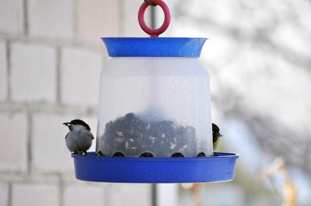 Птички в кормушке