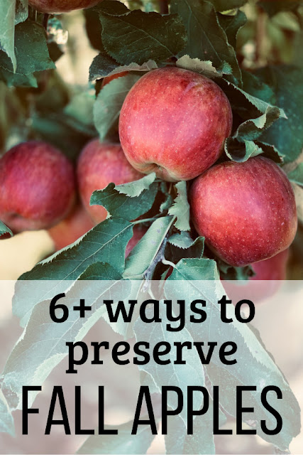How many ways can you preserve apples? Here are 6+ methods to get you started. You'll have plenty of ways to keep the doctor away!