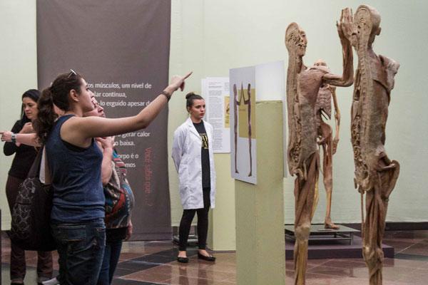 Exposição 'O Fantástico Corpo Humano' tem temporada prorrogada em Salvador, até 18 de dezembro