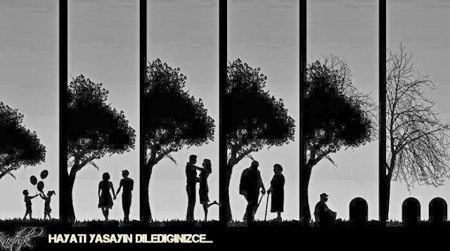 Hayat resimleri