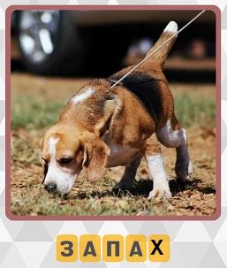 собака на поводке идет по следу  по запаху