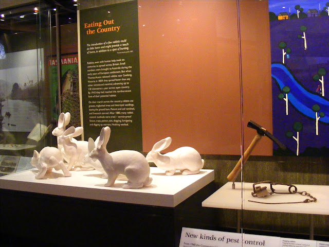 Display about rabbits at the Australian National Museum, Canberra. Photographed by Susan Walter.