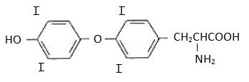 Tiroxina - Aminoácido