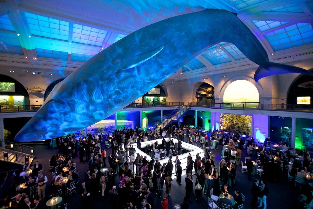 Noche en el Museo. Los 5 mejores Museos de Historia Natural