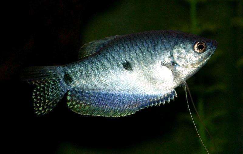 Jenis Ikan Hias Aquascape