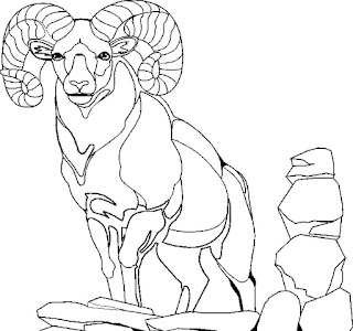Mountain Goat Coloring Sheet Collection