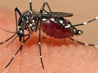 Ternyata Nyamuk Lebih Tertarik dengan Darah Wanita Hamil