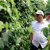 Gubernur Babel Erzaldi Rosman: Indonesia Penghasil Lada Putih Terbesar Dunia