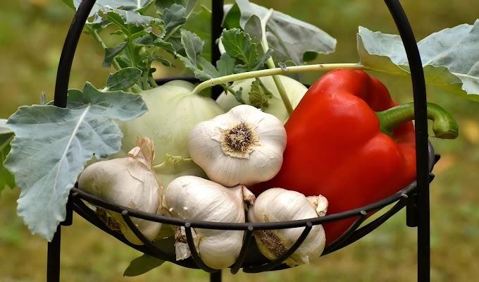 فوائد صحية للثوم واسباب قوية لتناوله