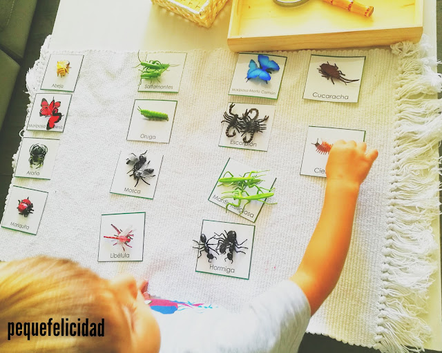 Pequefelicidad Nuestro Proyecto Insectos 20 Actividades Montessori