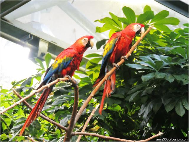 Selva Tropical del Biodôme: Guacamayo Macao