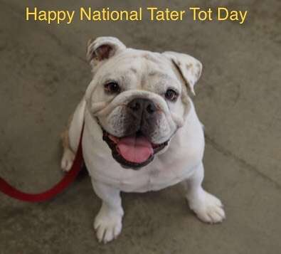 National Tater Tot Day Wishes Lovely Pics