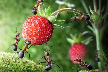 karıncalar-nasıl-beslenir