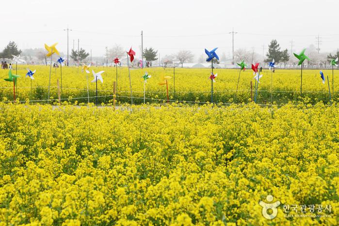 한강최대 꽃단지 40만㎡ 구리한강시민공원, '2019 구리 유채꽃축제' 개최