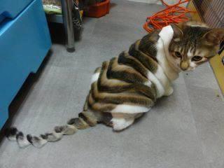 Bulu Rontok Pada Kucing