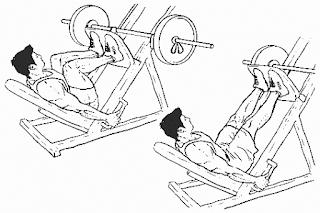 1. Leg Press