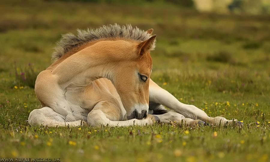 White Wolf 24 Baby Horses Are Saved From Going To
