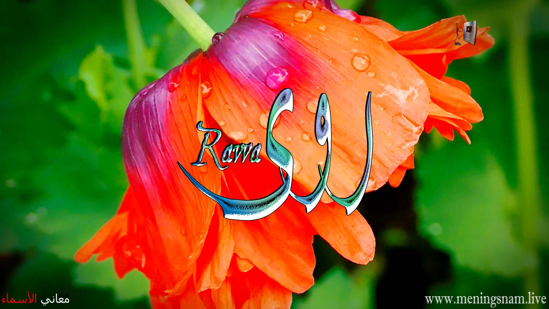 معنى اسم روى وصفات حاملة هذا الاسم Rawa