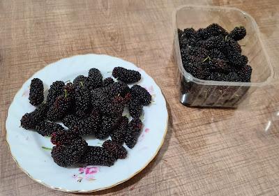 Karadut, Beyaz ve Mor Dut Meyvesi Nedir? Ne Zaman Yetişir? Böğürtlen ve Ahududu Meyvesi ile Farkı Nedir?