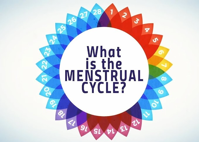 Menstrual Cycle & Nutrition