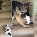 Μοναδικό βίντεο: Σκύλος βοηθά γατάκι να ανέβει τη σκάλα