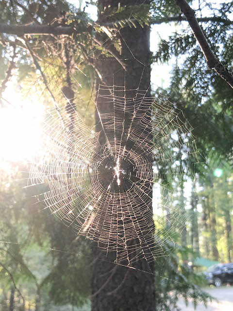 Spider Web at Glacier Campground