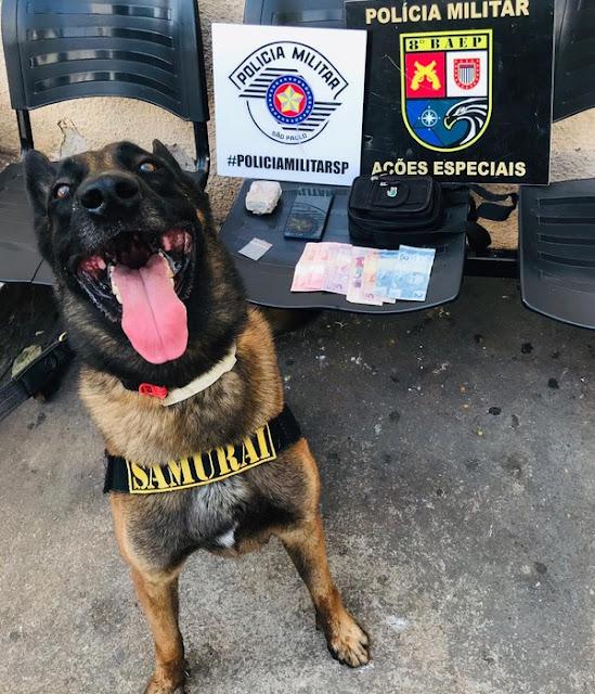 Com apoio de cão de faro, maconha e dinheiro são apreendidos pela Polícia Milita