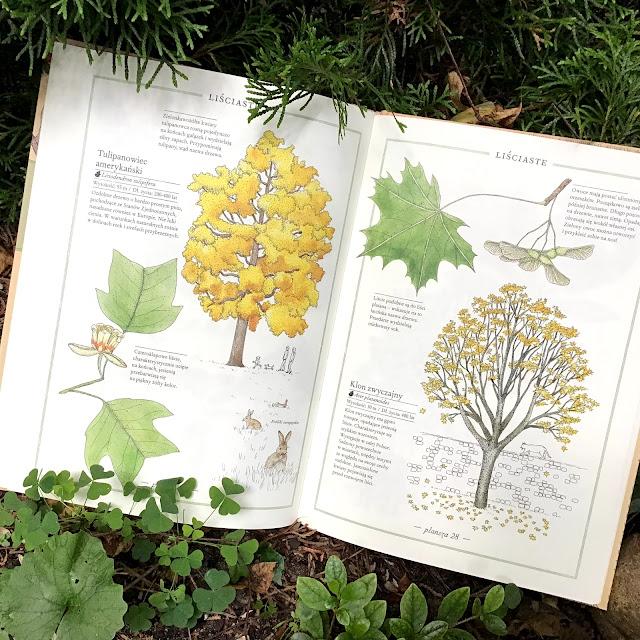 """""""Inwentarz drzew"""" Virginie Aladjidi, Emmanuelle Tchoukriel, Zakamarki, albumy przyrodnicze dla dzieci i dorosłych, dla każdego"""
