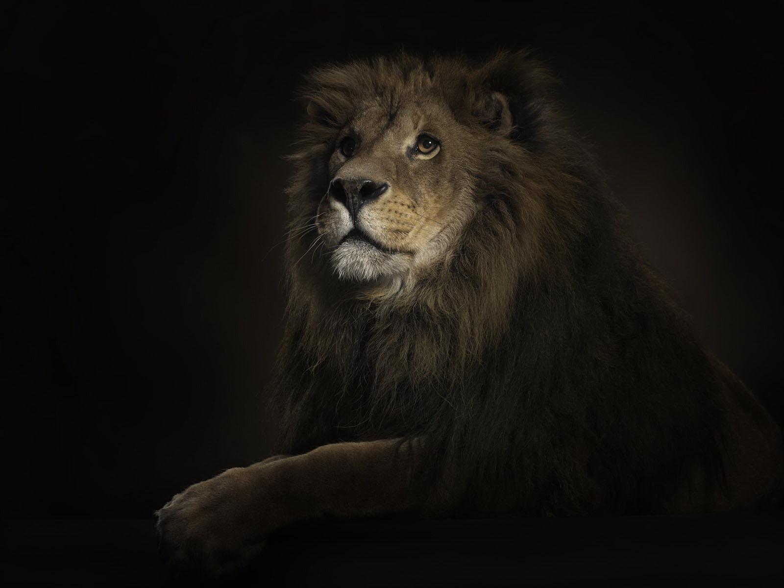 Dionne Beard: lion king hd