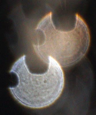 mystifying motif